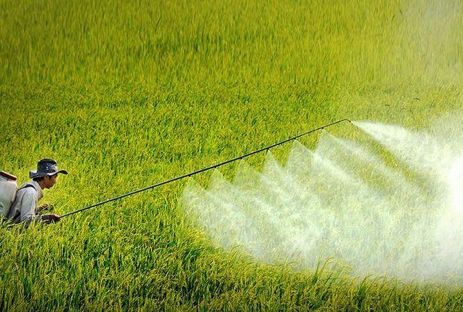Loại bỏ trên 1.000 loại thuốc bảo vệ thực vật độc hại