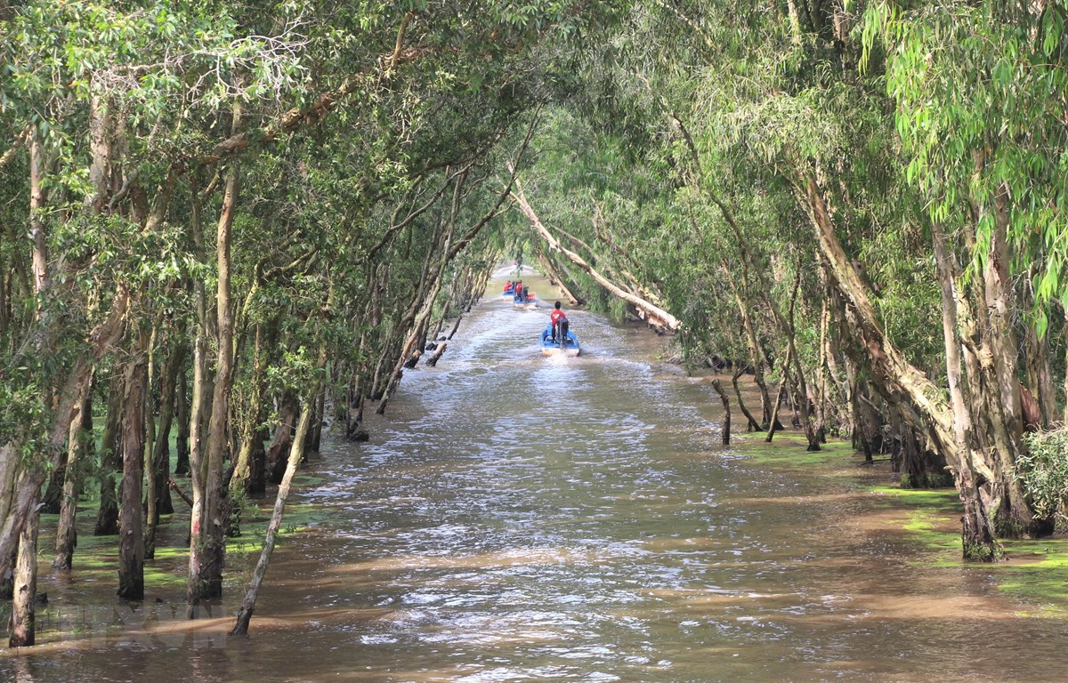 An Giang: Phê duyệt phương án quản lý Khu bảo vệ cảnh quan rừng tràm Trà Sư
